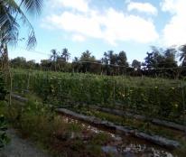 Bán đất ruộng(H1,5M), bình phù, cai lây, tiền giang.