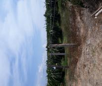 Bán vườn thanh long tại Thuận Quý Hàm Thuận Nam Bình Thuận