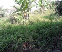 Bán gấp lô đất thổ cư sau trường tiểu học Hoa Động, Thủy Nguyên, 100m2, giá 5,5tr/m2