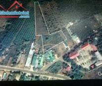 Bán đất gấp gần QL 28 trung tâm xã Đăk Nia, Thị xã Gia Nghĩa, Đăk Nông