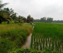 Bán 3200m2 đất lúa 175tr gần nga 4 huyện Châu Thành, xã Trí Bình