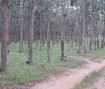 Bán vườn cao su 148 ha tại Lộc Ninh, Bình Phước, 45 tỷ. LH 0865860853