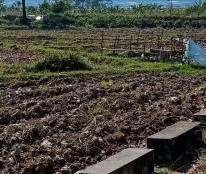 Bán đất đấu giá khu Quang Tiến, Sóc Sơn, gần sân bay Nội Bài, KD cực tốt, 110m2, 7 tr/m2