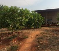 Cần cho thuê 6 hecta đất điều tại ấp 7 xã Thống Nhất huyện Bù Đăng tỉnh Bình Phước