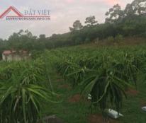 Bán trang trại Tuệ Châu tại thành phố Uông Bí, Quảng Ninh!