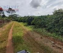 Cần bán 4.2Ha đất nông nghiệp trồng cà phê Đăk Nông