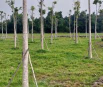 Đất thổ cư có sổ riêng, gần uỷ ban, chỉ 650tr/nền, điện-đường-nước hiện đại