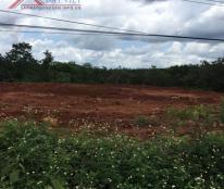 Chính chủ cần cho thuê đất mặt đường Sao Bọng Đăng Hà, ấp 7 ,xã Thống Nhất ,huyện Bù Đăng ,tỉnh Bình Phước