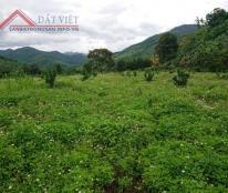 Cần bán lô đất rẫy đã trồng bưởi ở xã Thành Sơn, huyện Khánh Sơn, tỉnh Khánh Hòa