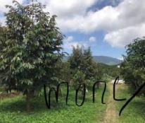 Cần Bán Vườn Trái Cây Trang Trại Nghỉ Dưỡng, Đại Lào, Bảo Lộc, Lâm Đồng