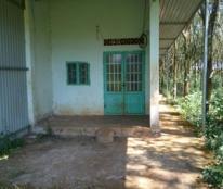 chính chủ Cần bán 5 mẫu đất trồng cây lâu năm  Huyện Đắk R'Lấp, Đắk Nông