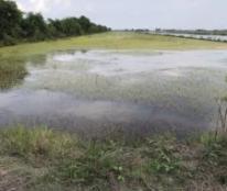 Cần bán gấp lô đất tại Ấp Kiên Thanh, Xã Kiên Bình, Tỉnh Kiên Giang