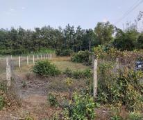 Bán đất chính chủ, 570m2, đã lên thổ cư, Phường Gia Lộc, Trảng Bàng, Tây ninh