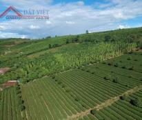 View đẹp khỏi chê - Lý Thái Tổ - TP Bảo Lộc Liên hệ:  0937508298