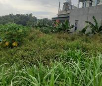 Chính chủ cần bán lô đất khu Rừng Trắng , xã Đồng Tĩnh , huyện Tam Dương , tỉnh Vĩnh Phúc