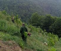Chính chủ cần chuyển nhượng đất rừng sản xuất.( keo ) đã trồng được 2 năm. Địa chỉ tại xã Kì Phú,Nho Quan,Ninh Bình.