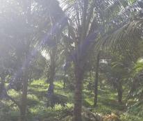 Bán nhanh lô đất vườn cây ăn trái siêu đẹp ngay trung tâm Lộc Thành Bảo Lâm Lâm Đồng.