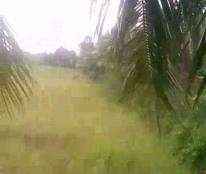 Chính Chủ Cần Bán Lô Đất Vị Trí Đắc Địa Tại huyện Trà Cú tỉnh Trà Vinh