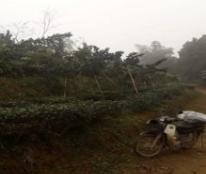 Chính chủ cần bán đất tại Khu 7 - Xã Trung Giáp - Huyện Phù Ninh - Tỉnh Phú Thọ.