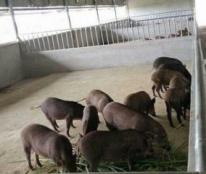 Chính chủ cần bán trang trại tại TDP Liên Phú, phường Kỳ Liên, Thị xã Kỳ Anh , Hà Tĩnh