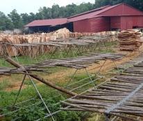 Chính chủ cần bán nhà đất và xưởng gỗ ở khu Gò Miếu , xã Sơn Tình , huyện Cẩm Khê , tỉnh Phú thọ