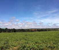 Cần Bán Gấp 6.6 ha đất vị trí đẹp Huyện Đaksong,  Đăk Nông