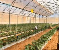Chính chủ bán gần 1ha2 đất hoa màu  nằm trong lòng khu dân cư hiện hữu ở xã Bình Tân, Bắc Bình, Bình Thuận giá chỉ 82.000đ/m2