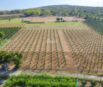 Bán đất vị trí thuận tiện mặt tiền liên huyện tại xã Hồng Thái Huyện Bắc Bình giá bán liền 64.000đ m2 dt 1ha3 vuông vức trồng cây hoa màu
