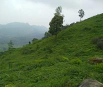 Bán đất sản xuất rừng trồng cây lâu năm giá rẻ Kim Bôi