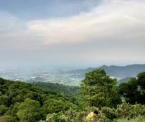 Chính chủ cần bán đất tại Thái Hoà - Nghệ An