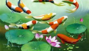Cách treo tranh cá chép hợp phong thủy trong nhà ở