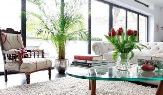 Một số lưu ý trong phong thủy khi đặt cây cảnh trong nhà